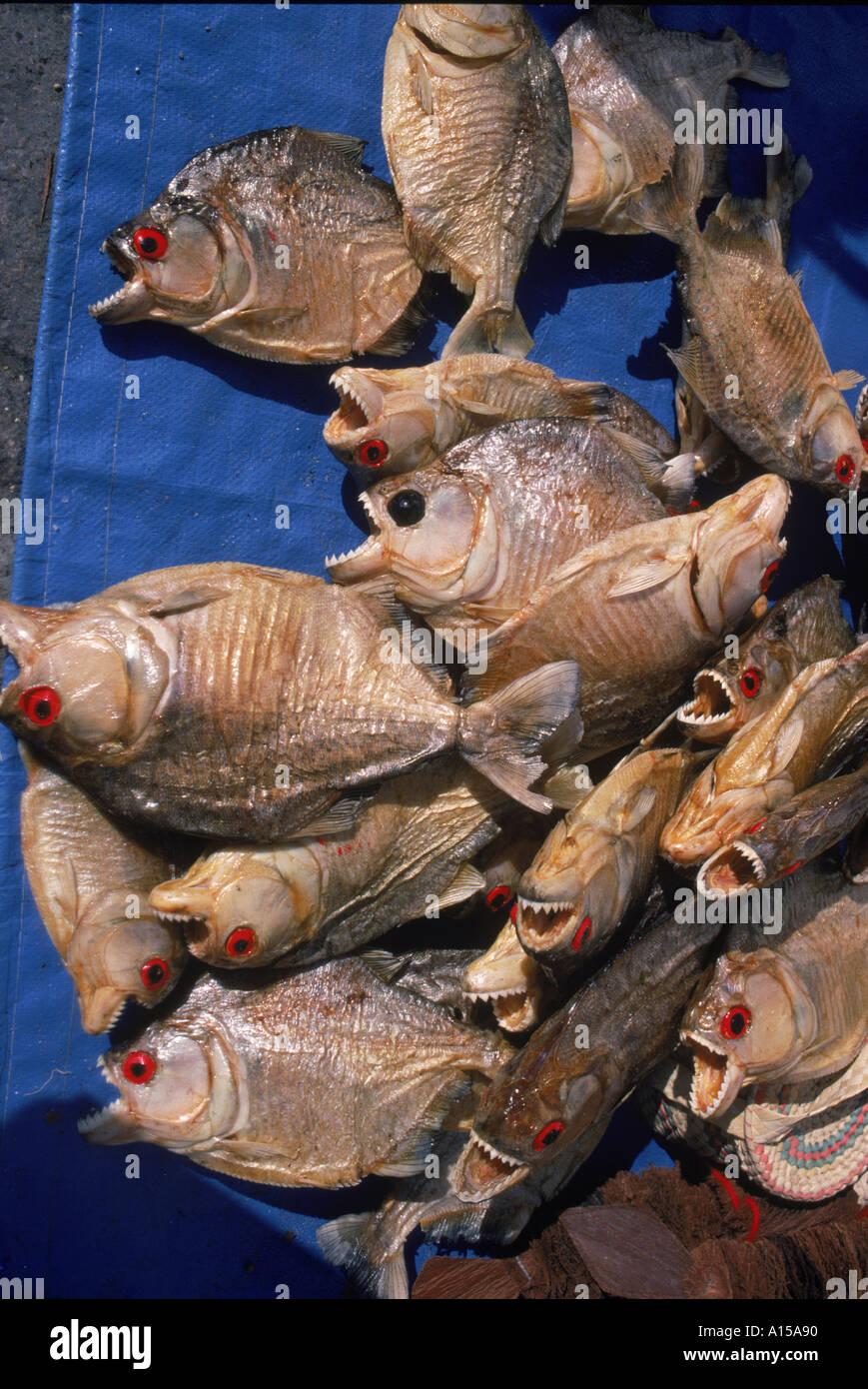 Dried piranha fish for sale in Santarem in Brazil South America K