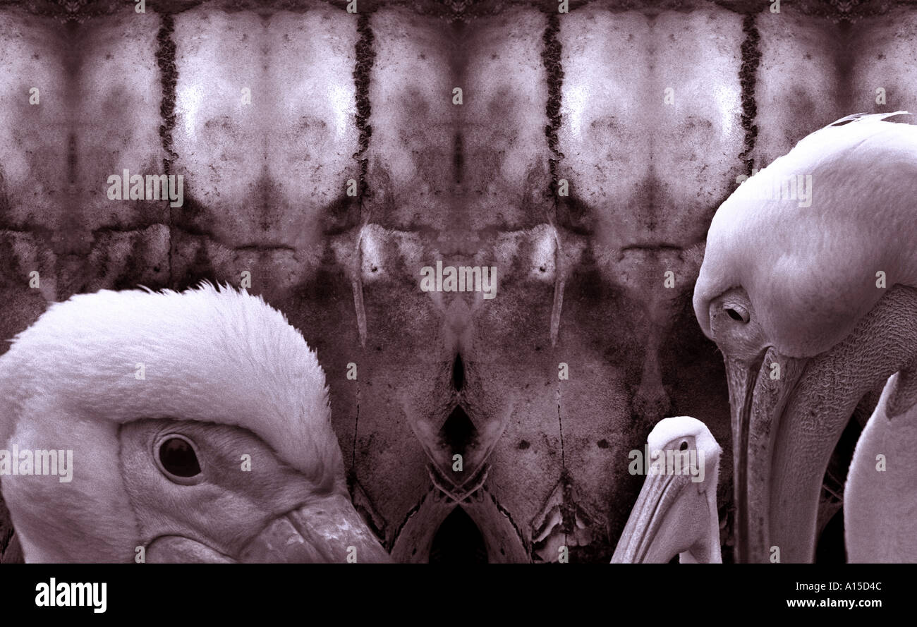 Surrealist art with pelicans. - Stock Image