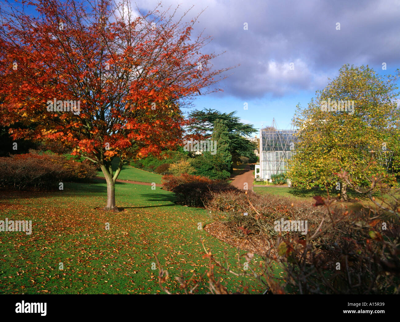 dh  ROYAL BOTANIC GARDEN EDINBURGH Red autumn leaves tree and Glasshouse botanical gardens park - Stock Image