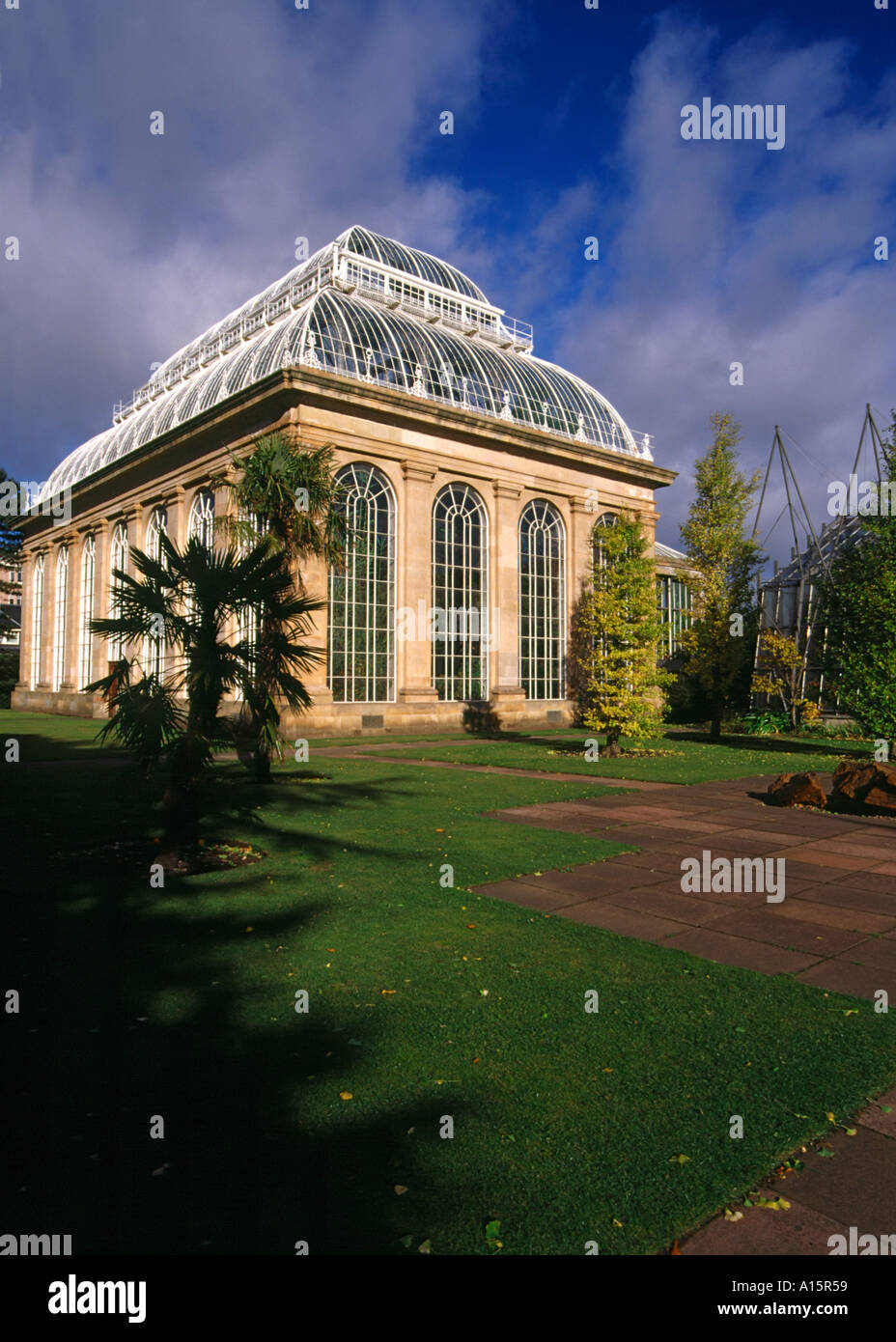 dh  ROYAL BOTANIC GARDEN EDINBURGH Palm tree glasshouse uk greenhouse gardens botanical - Stock Image