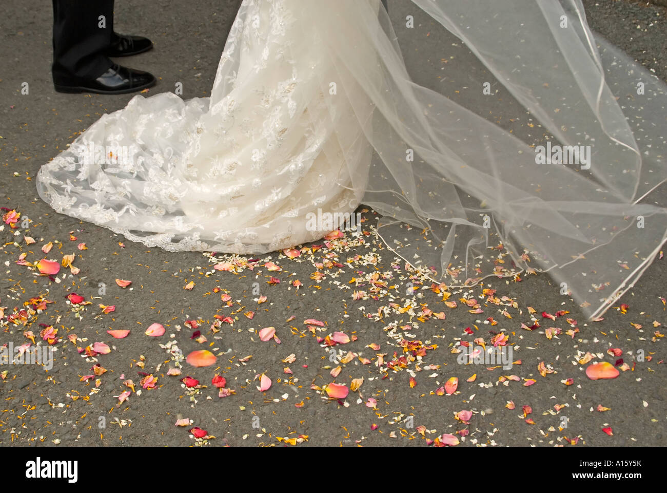 Horizontal close up of organic rose petal confetti on the ground after being thrown at the bride and groom at a - Stock Image