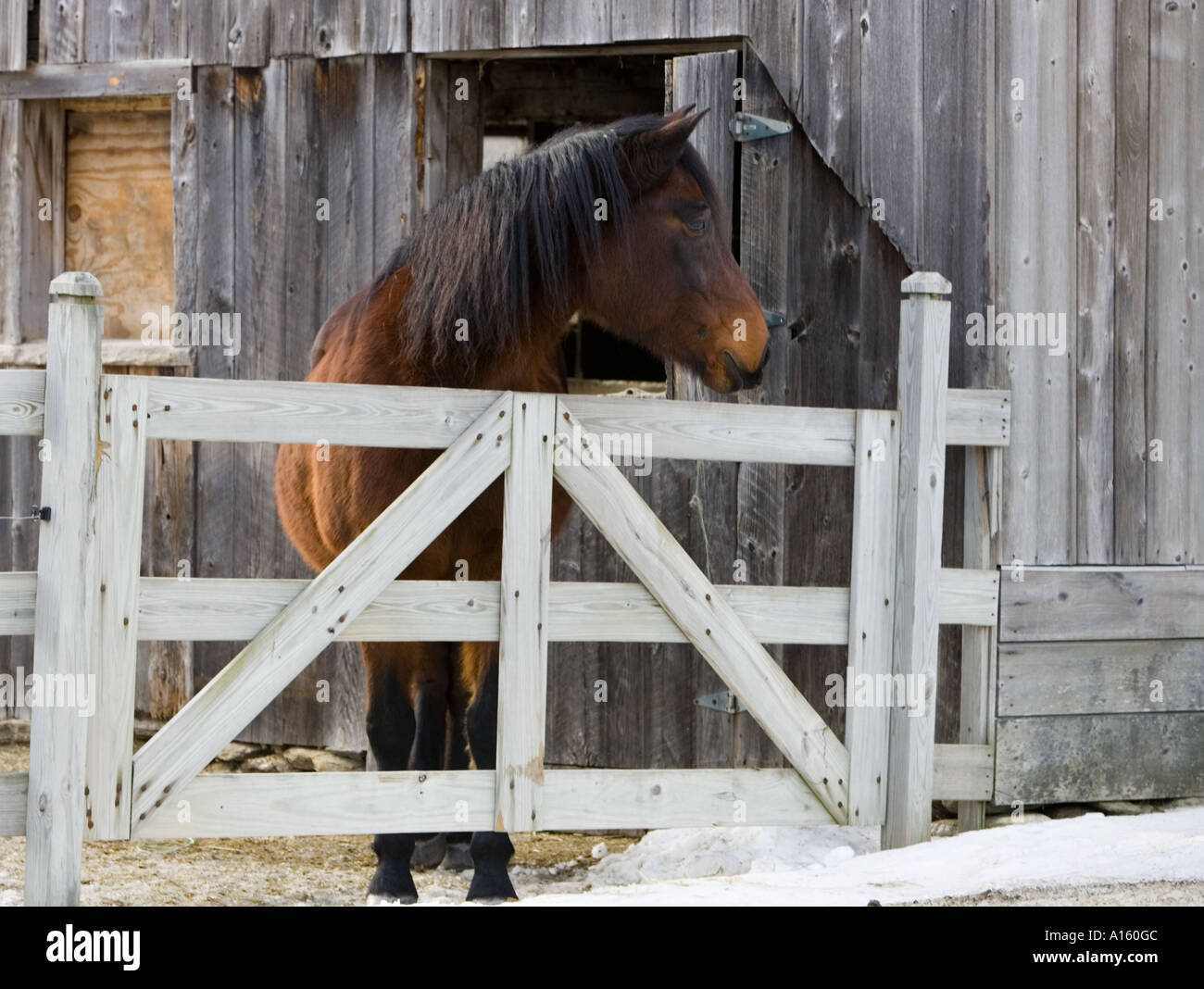 A Horse In Front Of A Rustic Barn Stock Photo Alamy