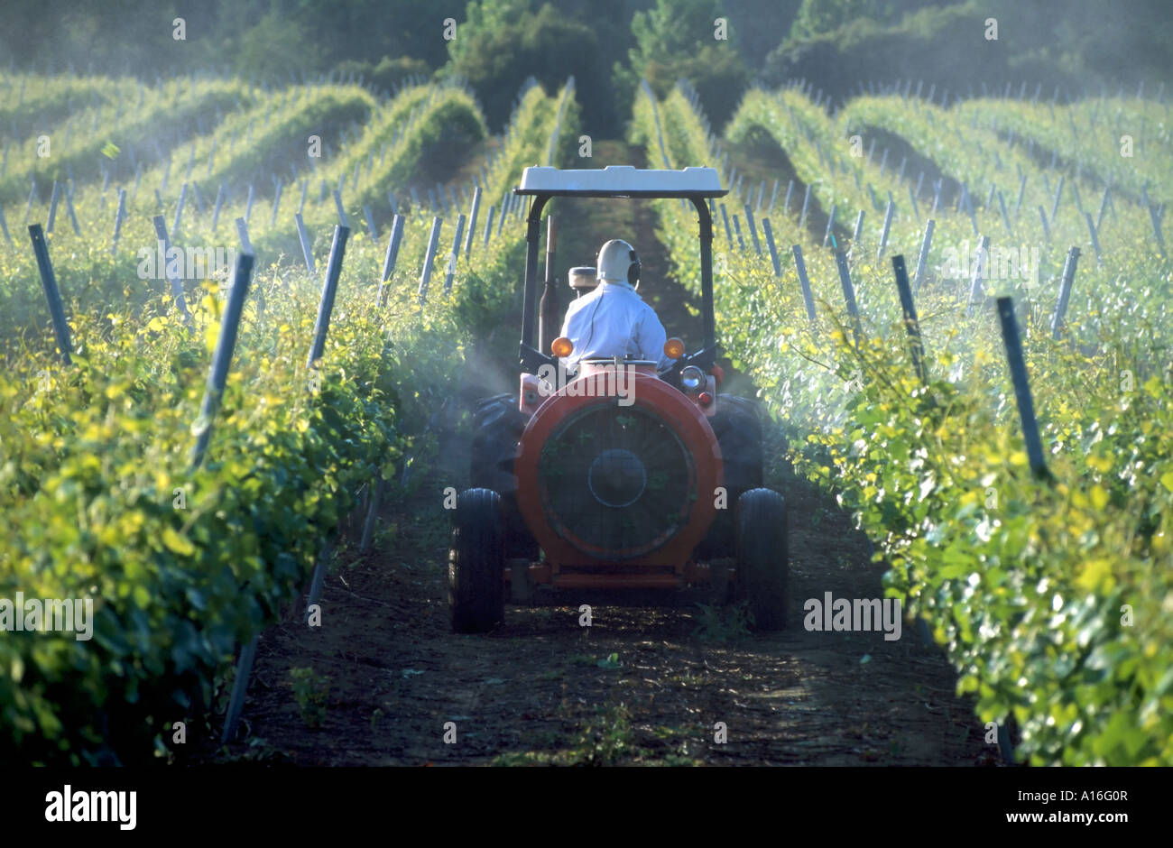 spraying pesticides in vineyards Anderson Valley CA - Stock Image