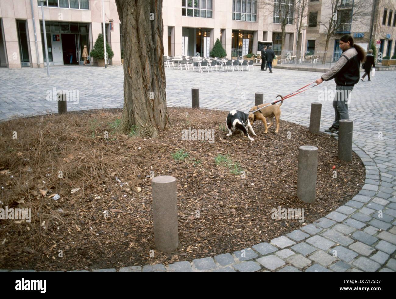 Man walking two dogs Nuremberg Germany - Stock Image