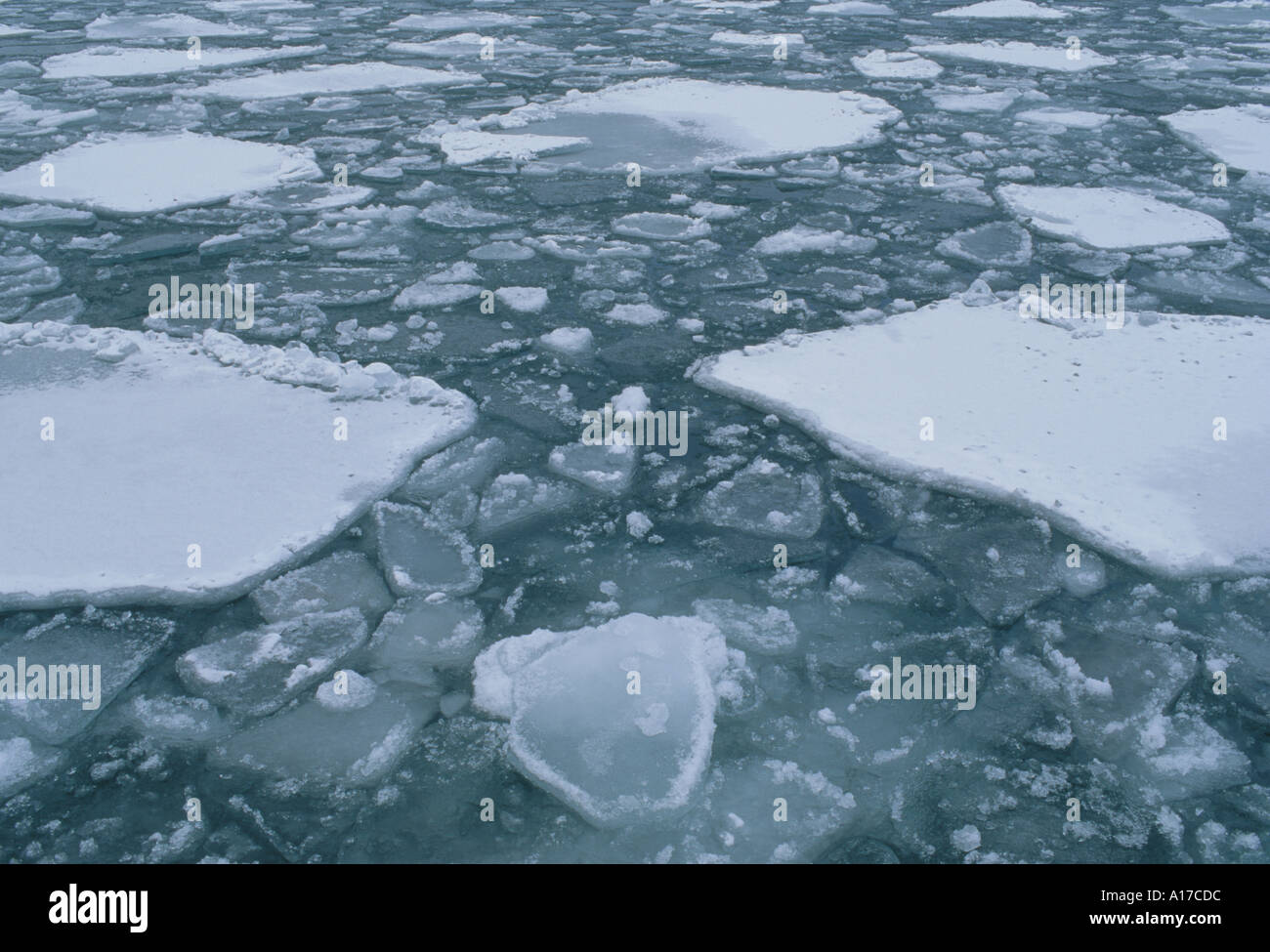 Pancake ice Lake Superior MN - Stock Image