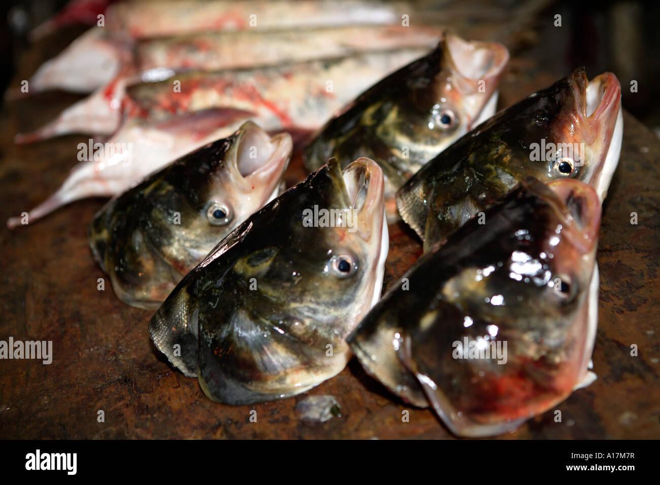Fish Heads, Central Market, Shunde, Foshan, GuangDong, China. Stock Photo
