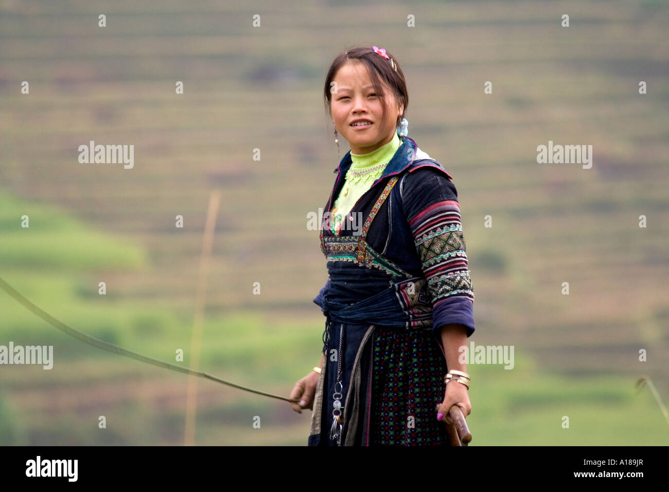 2007 Hmong Girl in Traditional Clothes Grazes Cattle Sapa Vietnam Stock Photo