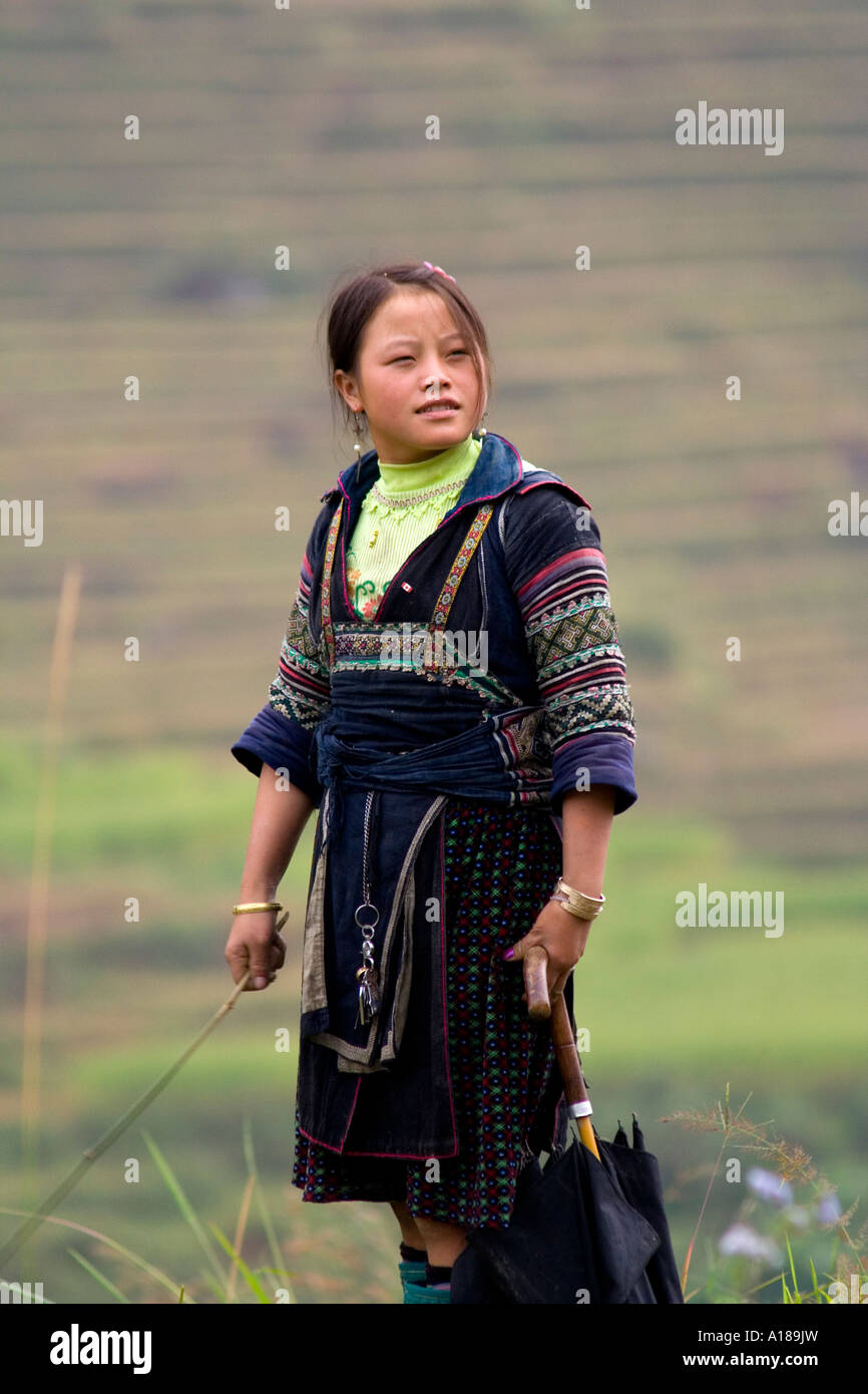 Hmong Girl in Traditional Clothes Grazes Cattle Sapa Vietnam Stock Photo