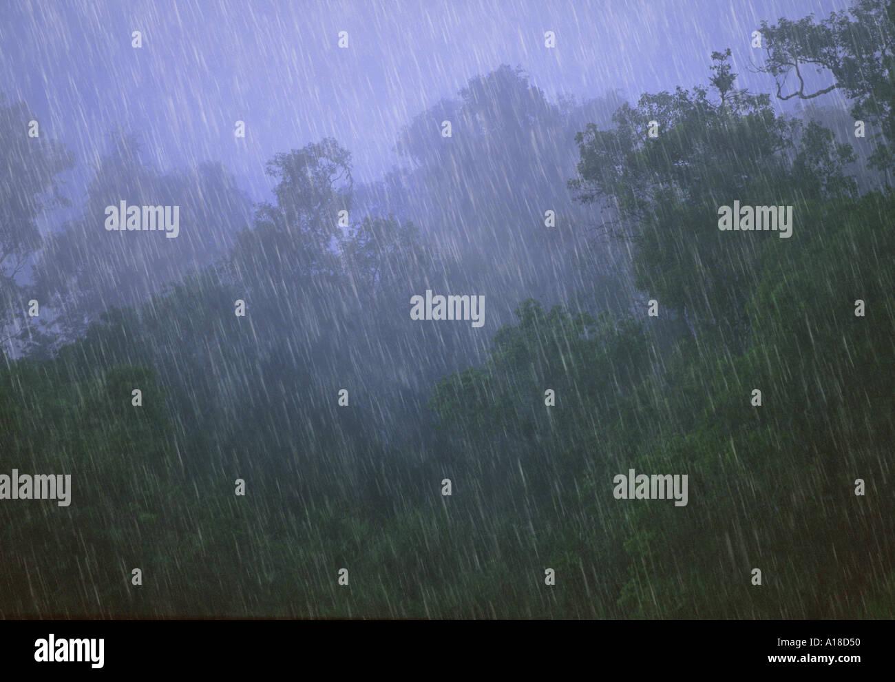 Rainstorm in tropical rainforest Borneo - Stock Image