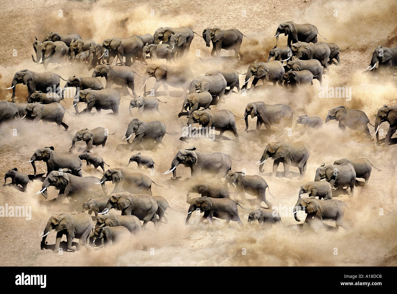 Elephant herd photographed from the air Amboseli National Park Kenya - Stock Image