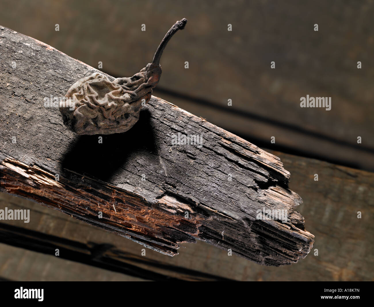 Old Dried Pear On Rotten Wood - Stock Image