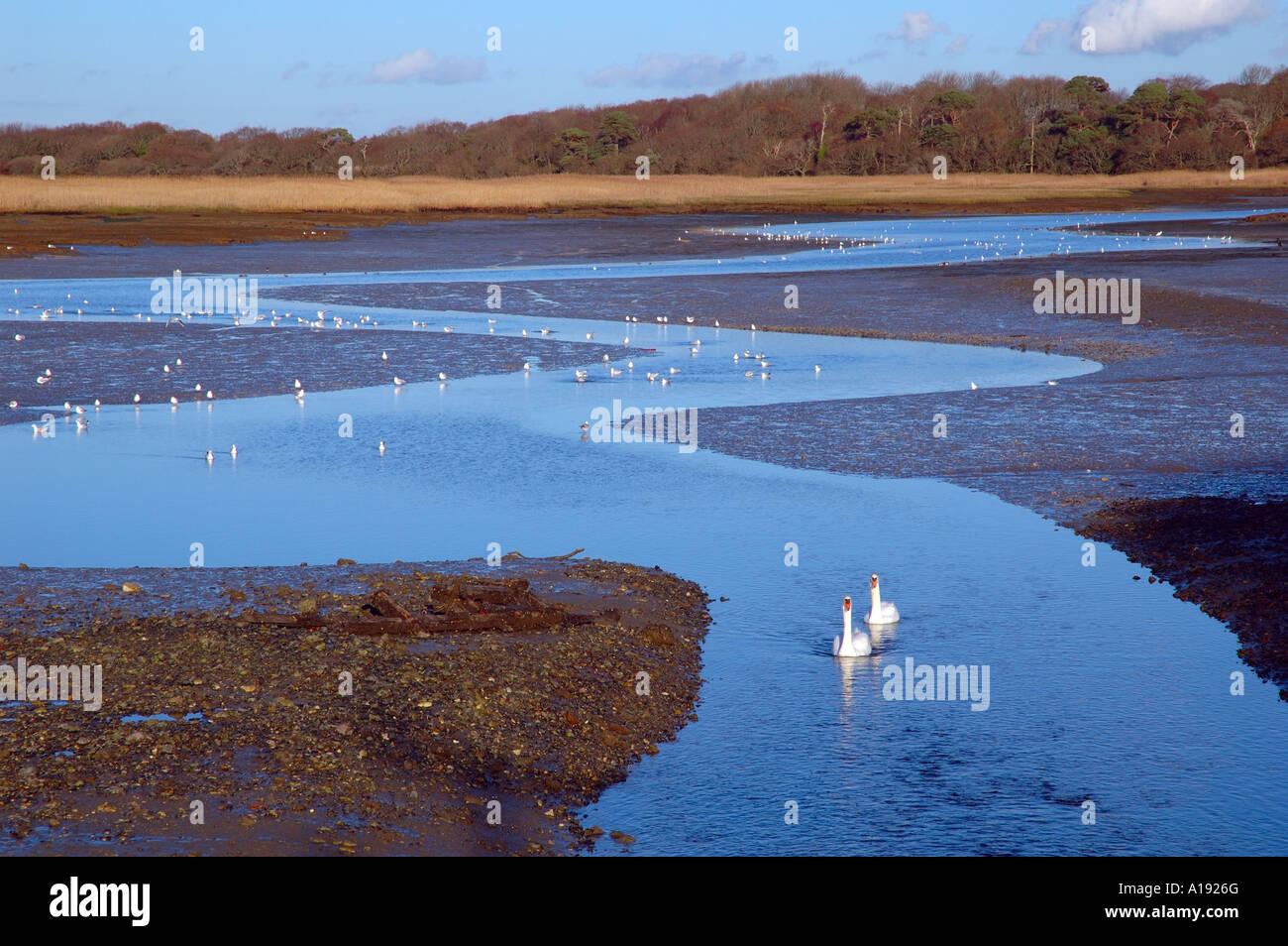 River Yar,  Freshwater, Isle of Wight, England, UK, GB. - Stock Image
