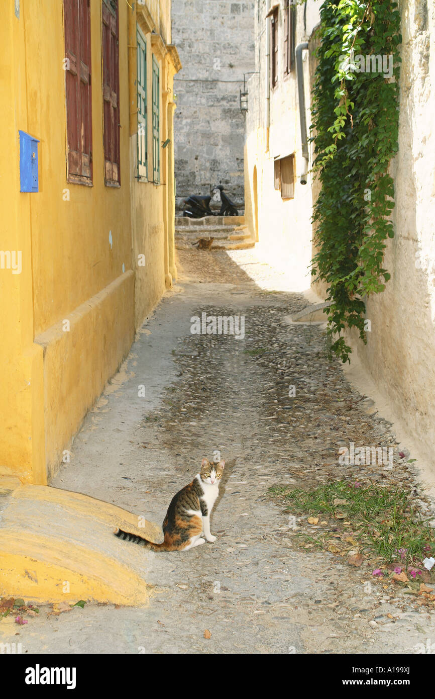 cat in the Old Town of Rhodos - Stock Image