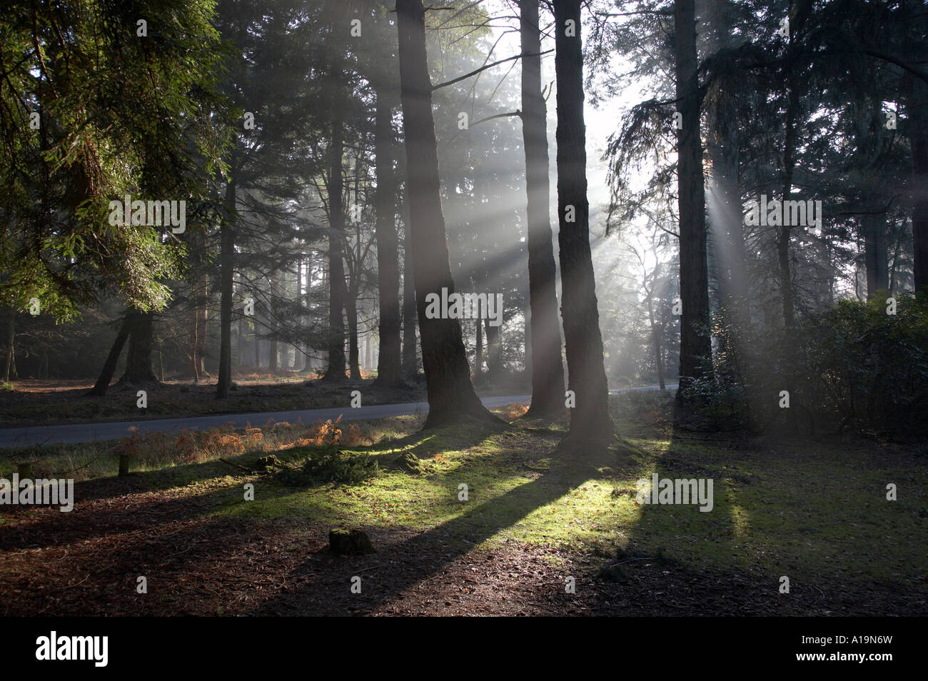 New Forest on Rhinefield Road in Hampshire UK - Stock Image