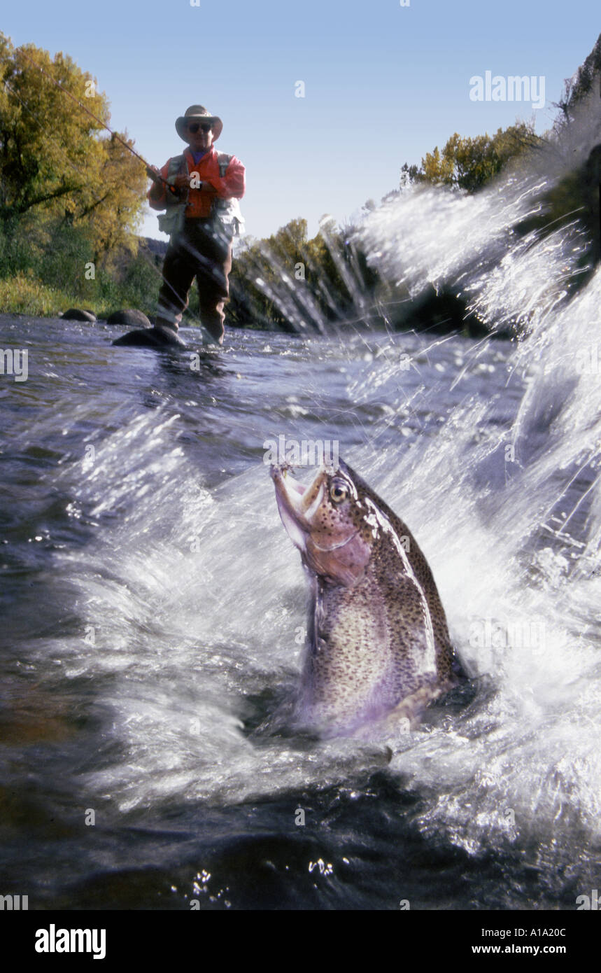 Man fly fishing in a shallow river with a rainbow trout ...