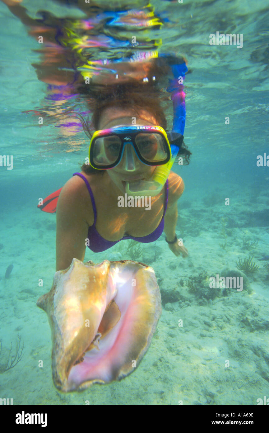 snorkeler with shell, underwater, Caribbean, Grand Cayman, female snorkeler, snorkel, ocean, sea, shallow water, - Stock Image