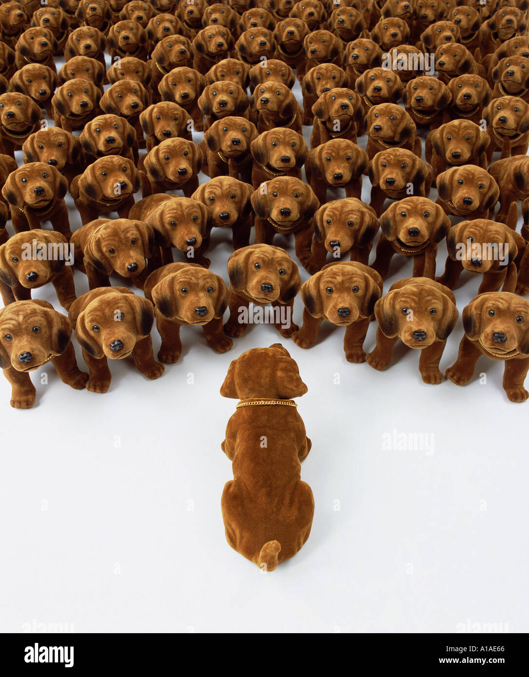 Single nodding dog talking to group of nodding dogs - Stock Image