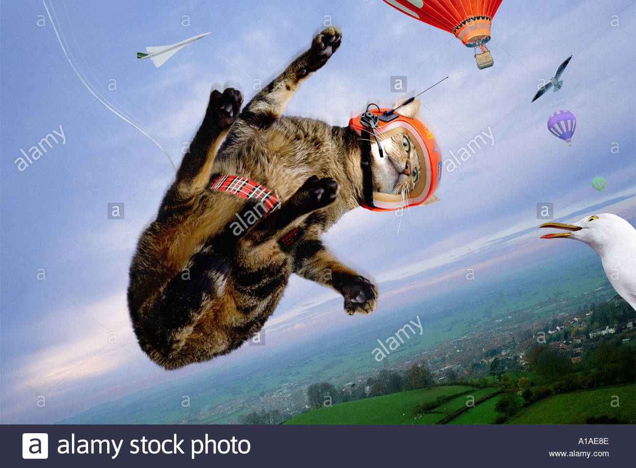 Cat on a bungee jump - Stock Image