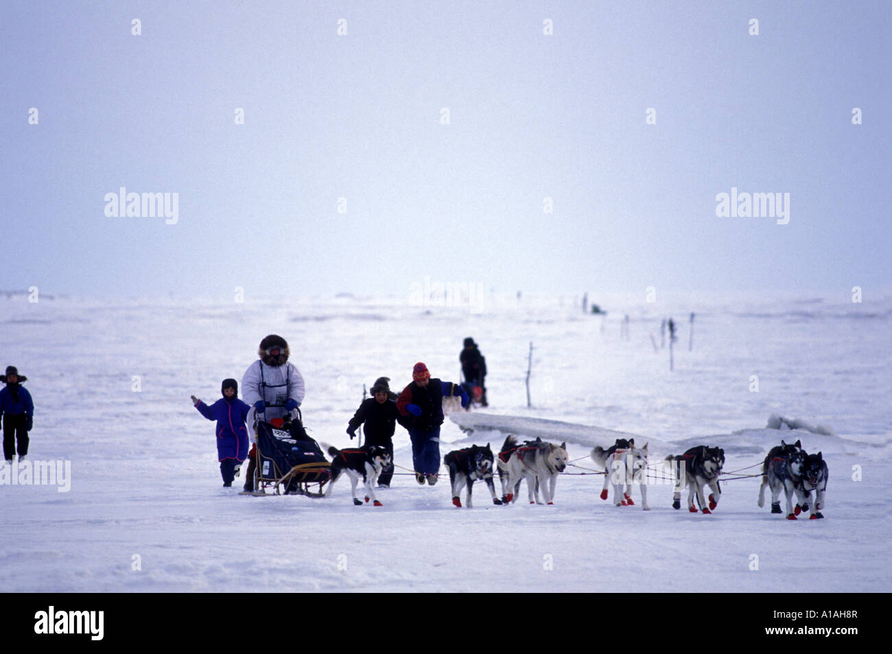 Susan Butcher sled dog musher