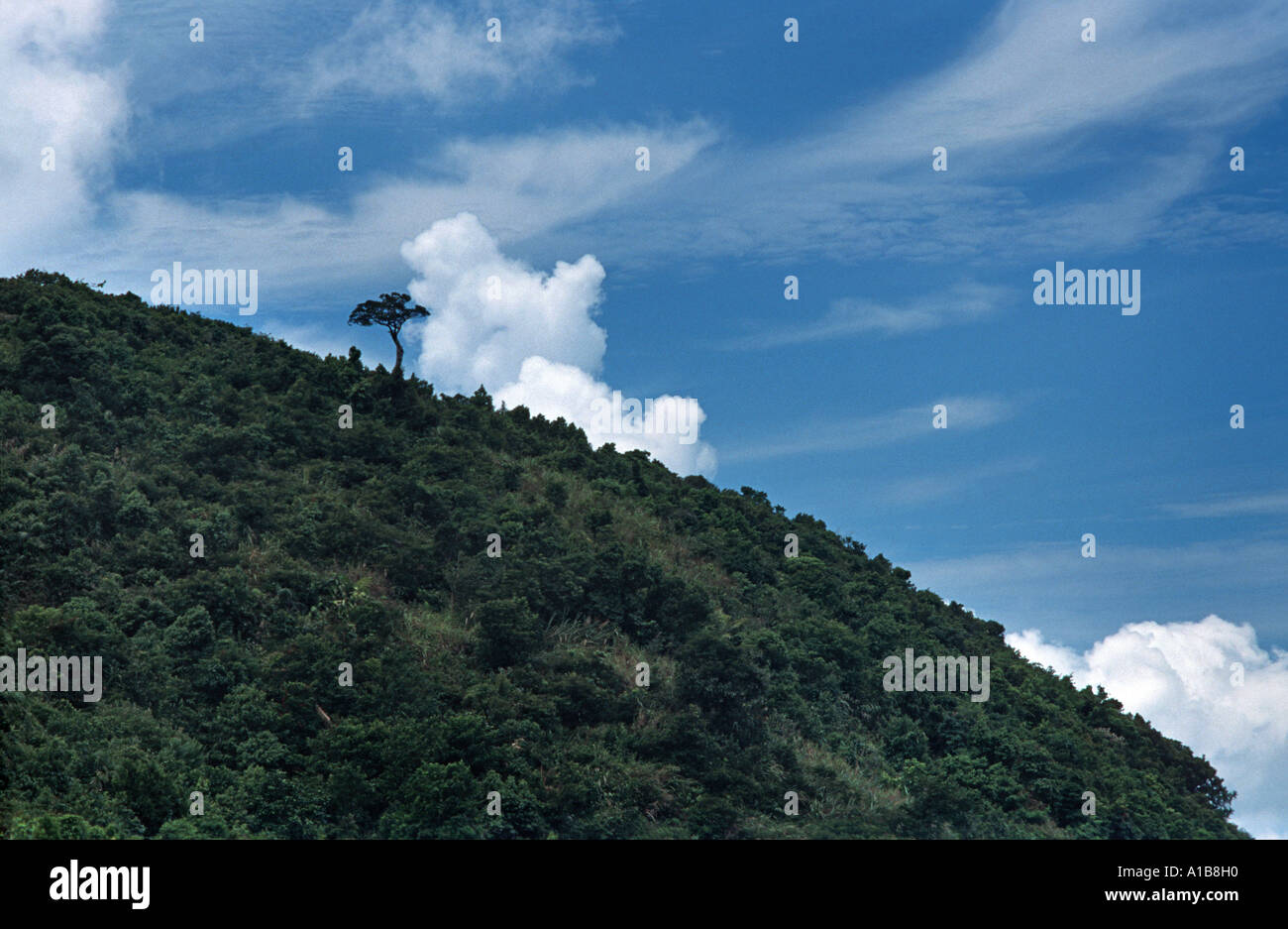 Solitary tree on a ridge above the Hai Van Pass Near Danang Vietnam Indochina - Stock Image