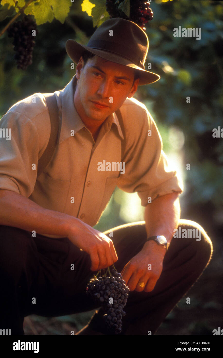 A Walk In The Clouds Year 1995 Director Alfonso Arau Keanu Reeves - Stock Image