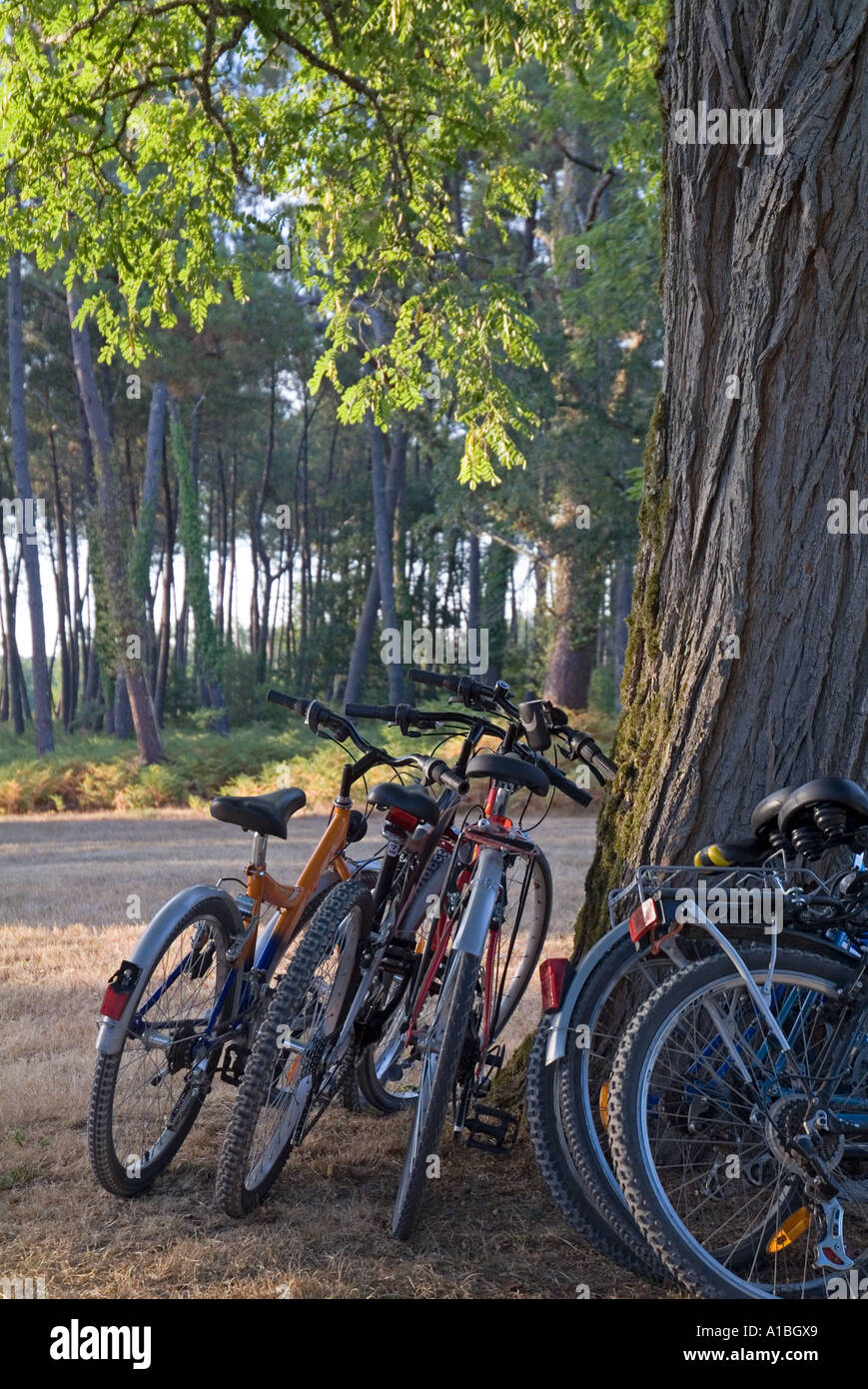 Parked mountain bikes leaning against a tree trunk. - Stock Image