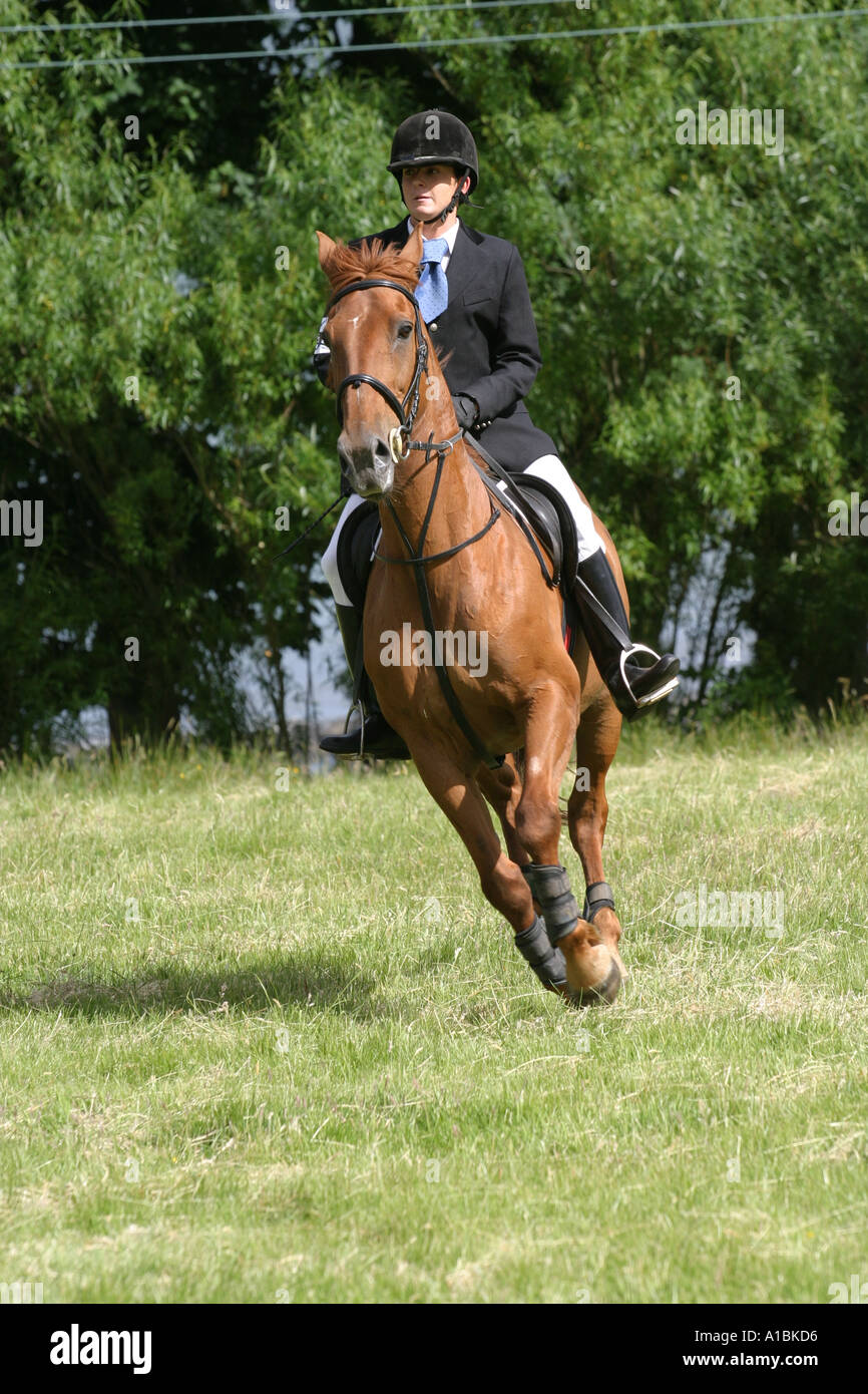 female rider and horse going on the trot at a Gymkana at carnfunnock country park Larne County Antrim Northern Ireland - Stock Image
