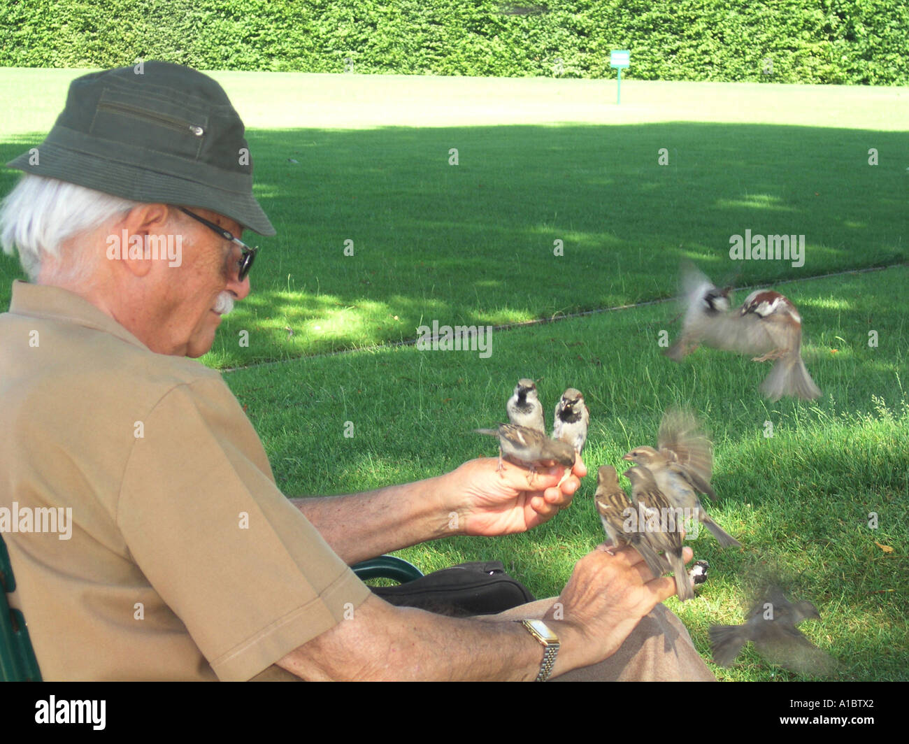 old aged pensioner feeding sparrows in Tuileries gardens Paris France Stock Photo