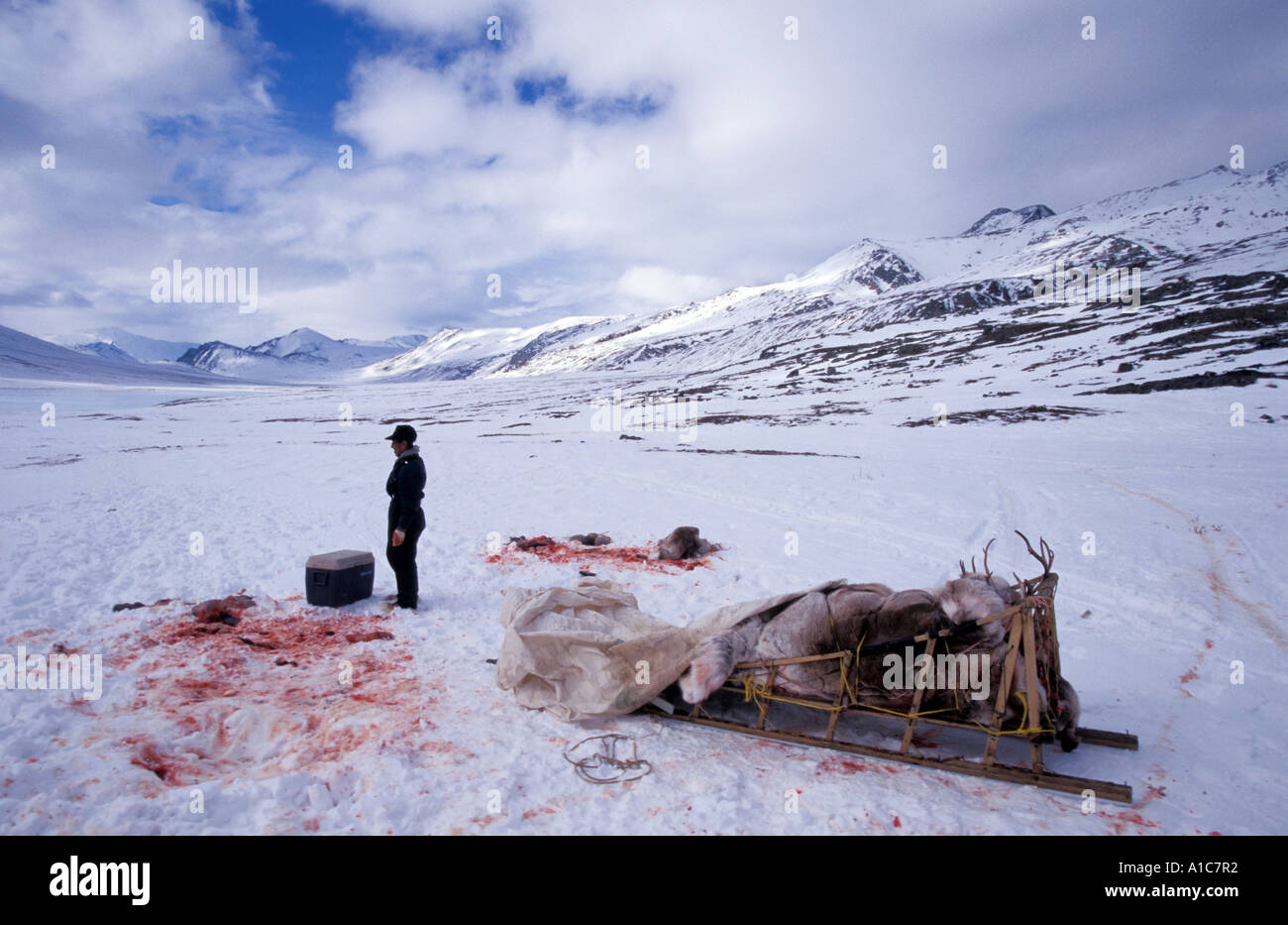 Inuit Caribou Hunter In The Arctic