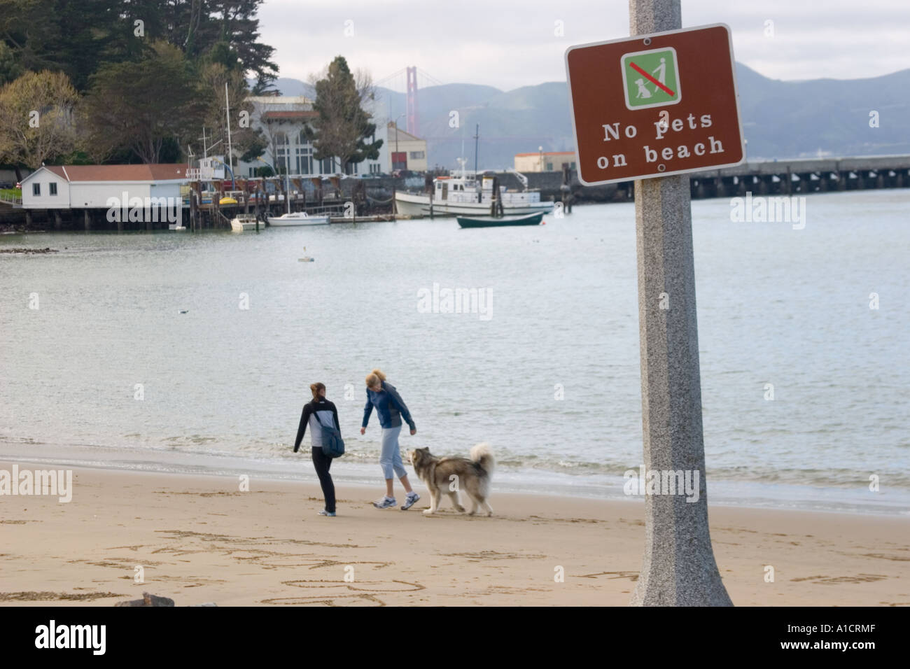 Two women walk a dog on the beach despite a sign that reads NO PETS ON BEACH at Aquatic Park GGNRA San FranciscoStock Photo