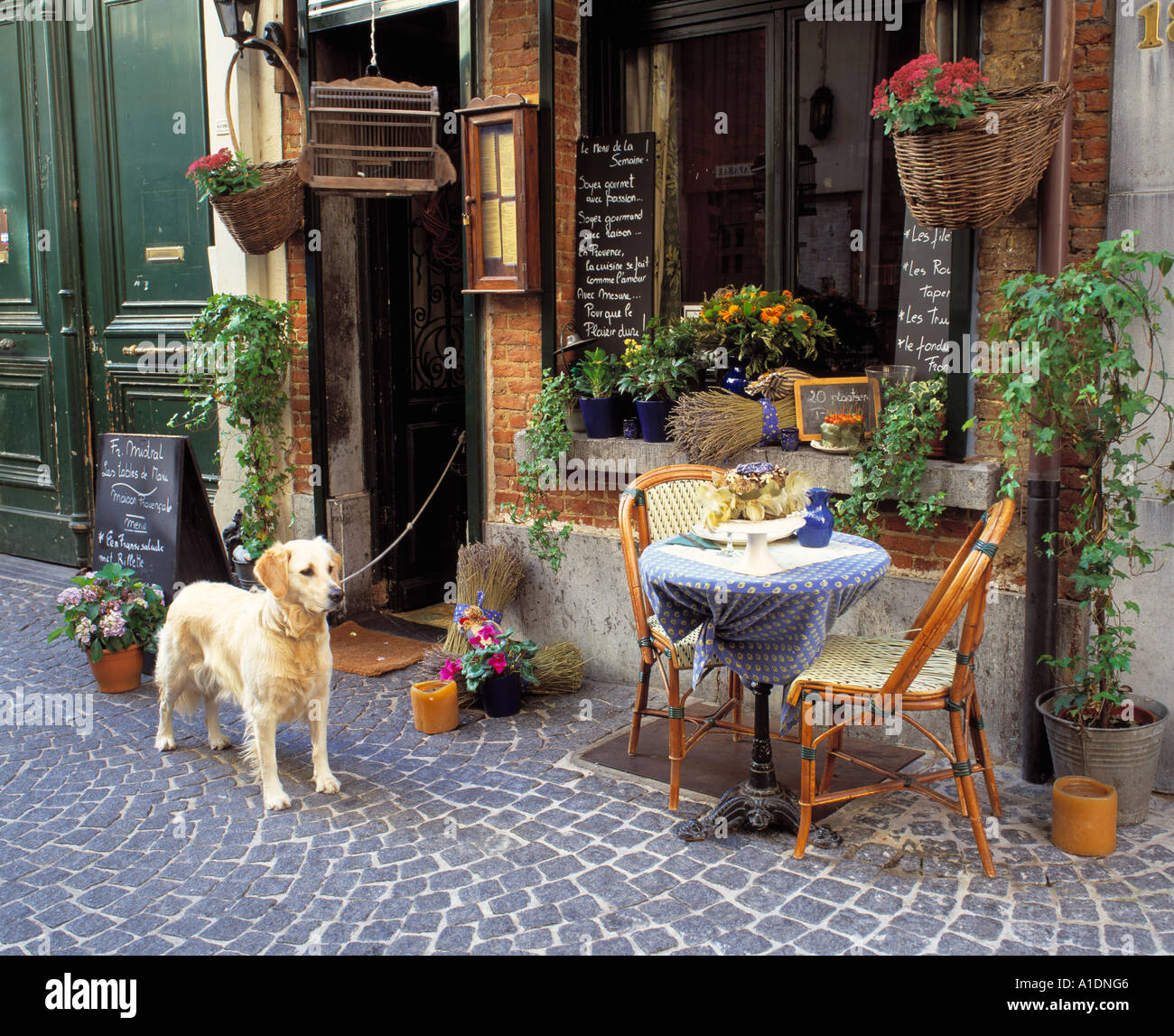 Antwerp Belgium Dog Stock Photos & Antwerp Belgium Dog Stock Images ...