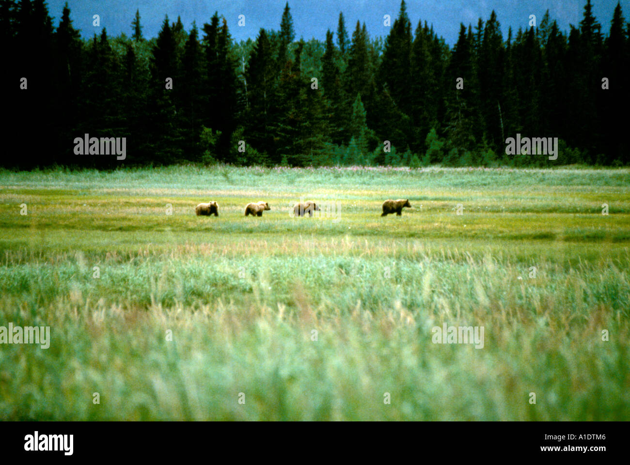 Alaska Lake Clark Natl Park Bear Camp for grizzly bear viewing - Stock Image