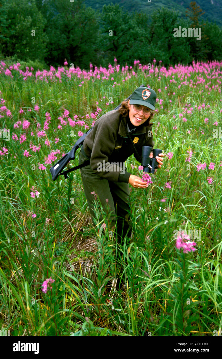 Alaska Lake Clark Natl Park Bear Camp for grizzly bear viewing Ranger looking at wildflowers - Stock Image