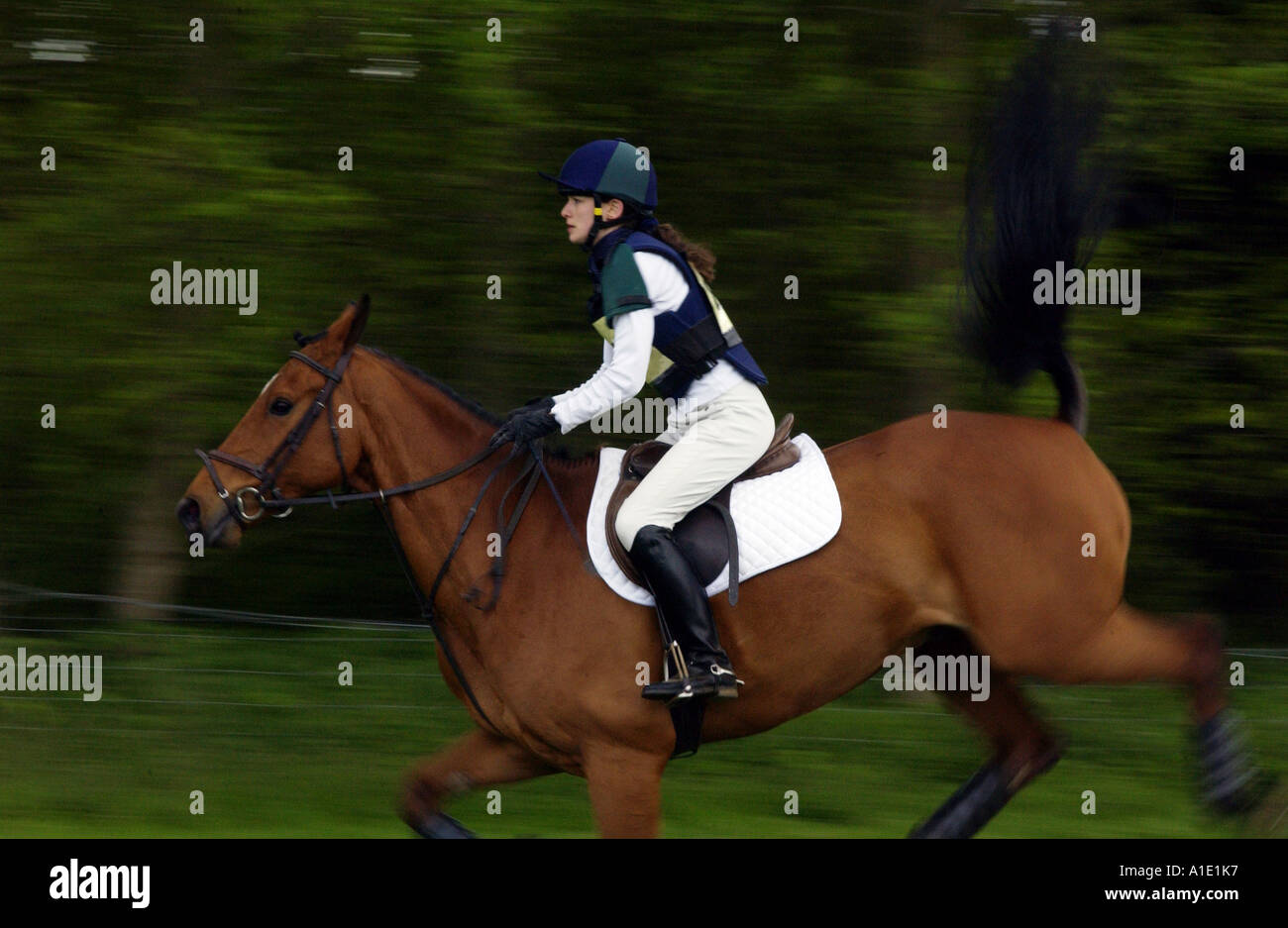 Cleveland Bay cross Thoroughbred bay horse bucks during cross country section at eventing competition United Kingdom - Stock Image