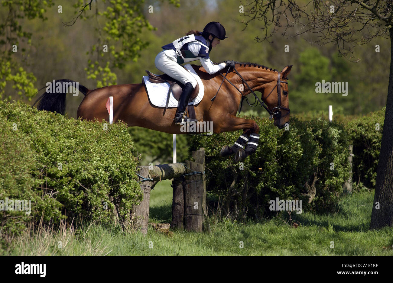 Young Woman Rides A Dark Bay Horse In A Cross Country Eventing Stock Photo Alamy