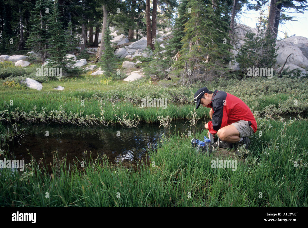 A hiker filters water from the headwaters of Squaw Creek in the Tahoe National Forest California United States of Stock Photo
