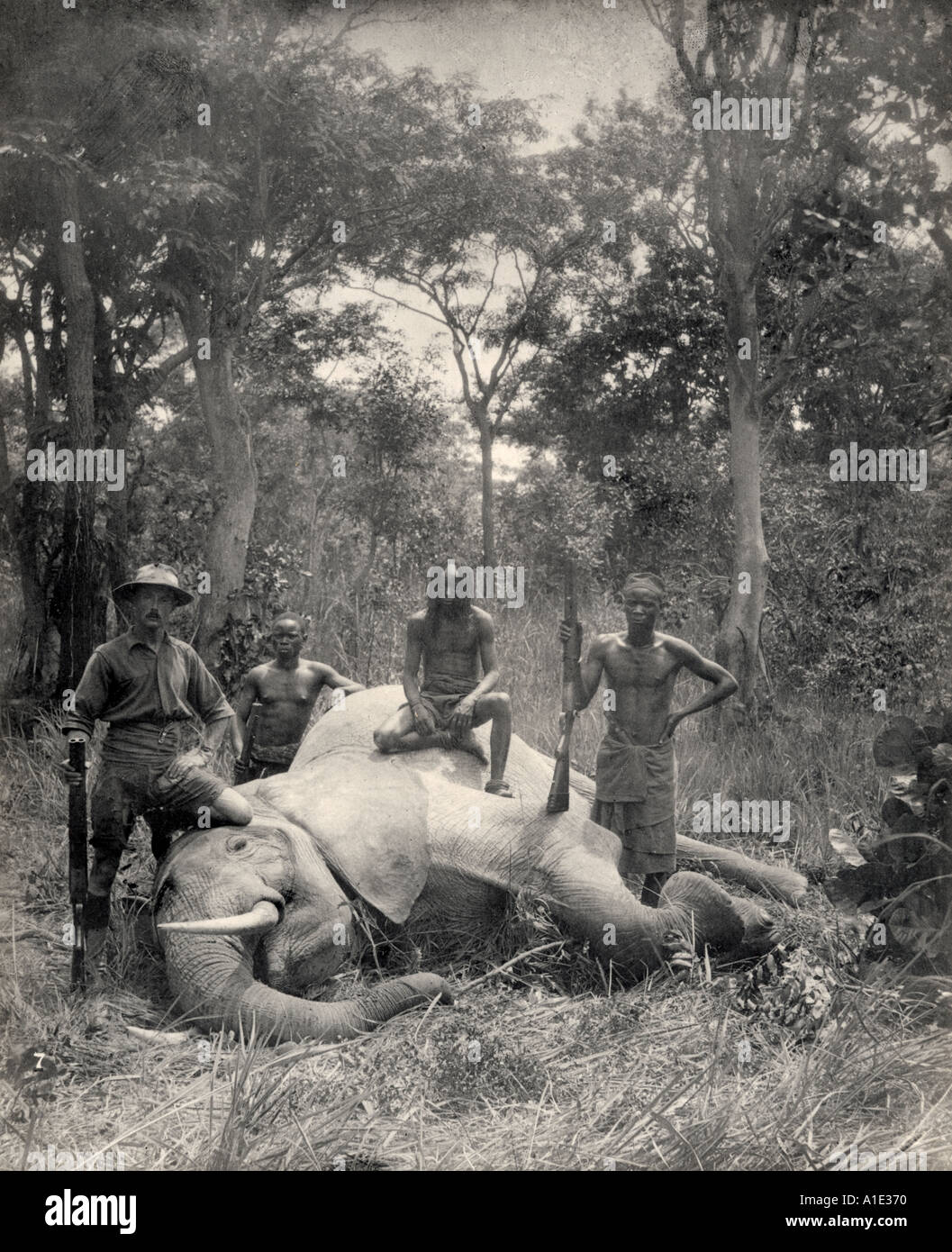 A European hunter with African men sit on a killed elephant - Stock Image
