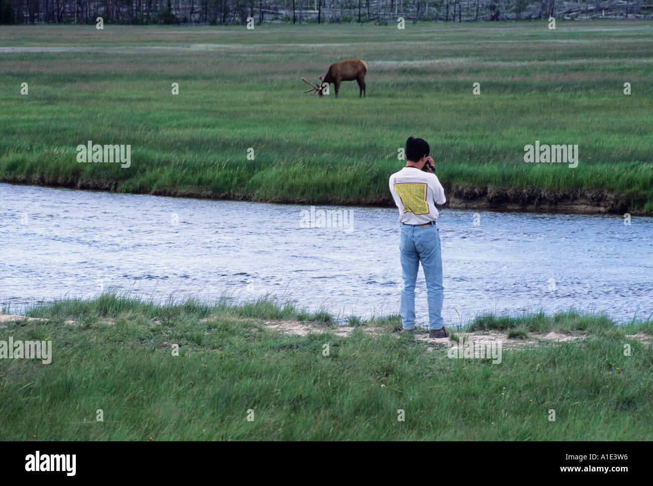 A park visitor taking photos of an elk at Yellowstone National Park Wyoming Stock Photo