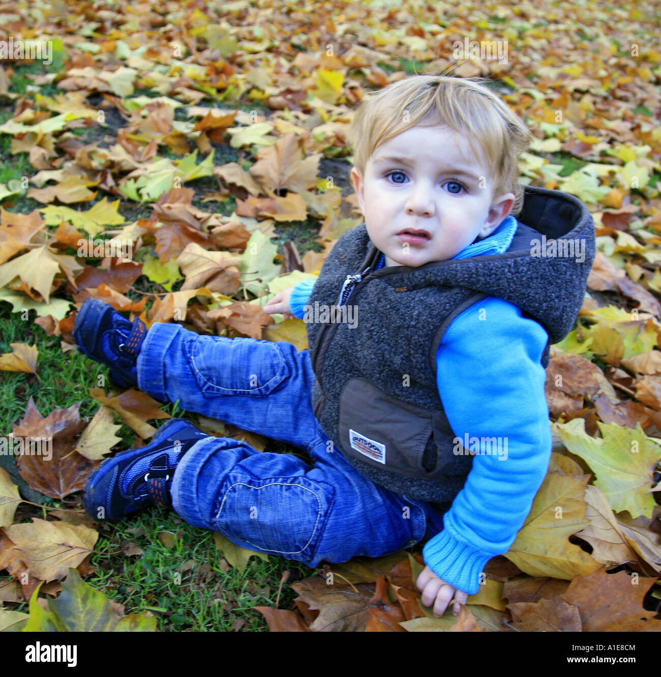 little boy sitting on foliage covered lawn Stock Photo