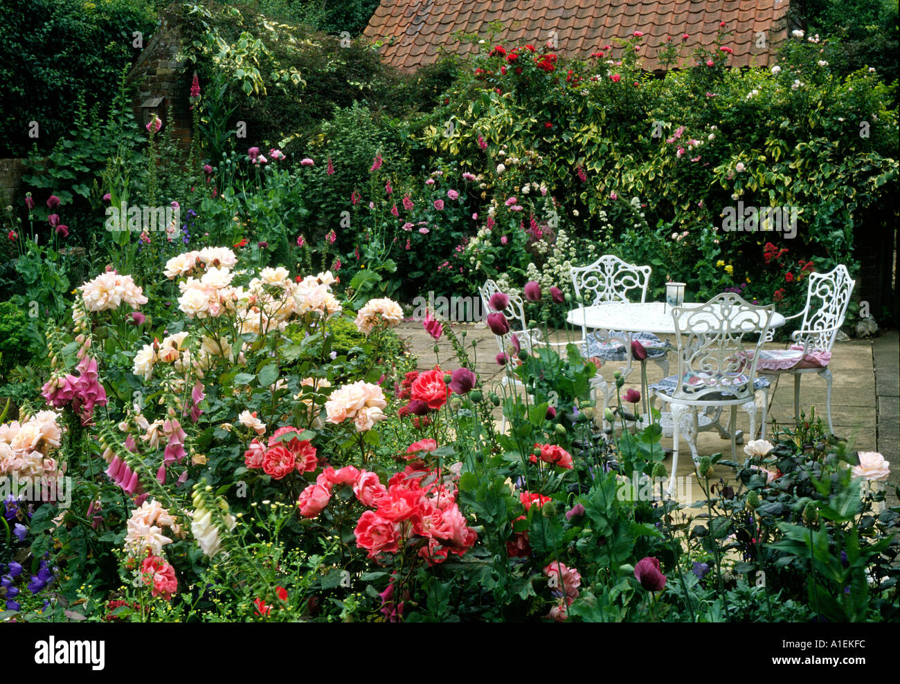 https www alamy com rose garden and patio garden furniture plants flowers roses white image3341307 html