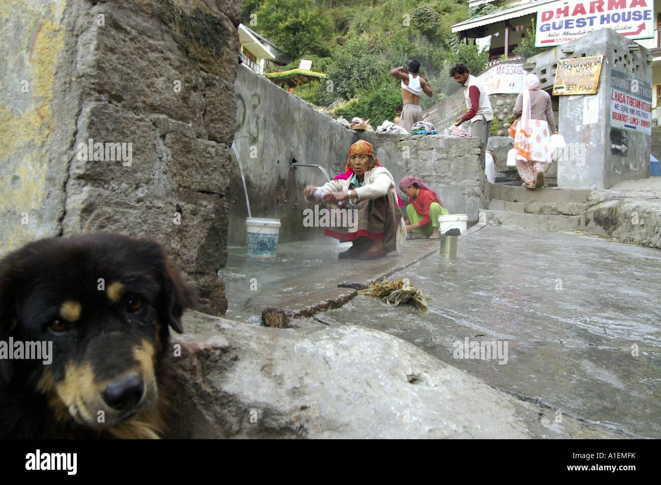 Bored dog turning away his head from scene of bathing men in hot springs, Vashisht, India - Stock Image