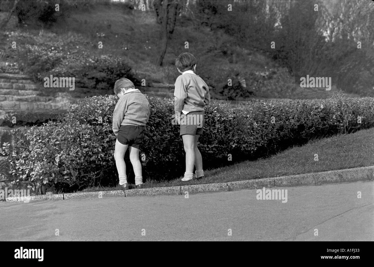Two young boys having a wee against a hedge in Scarborough North Yorkshire