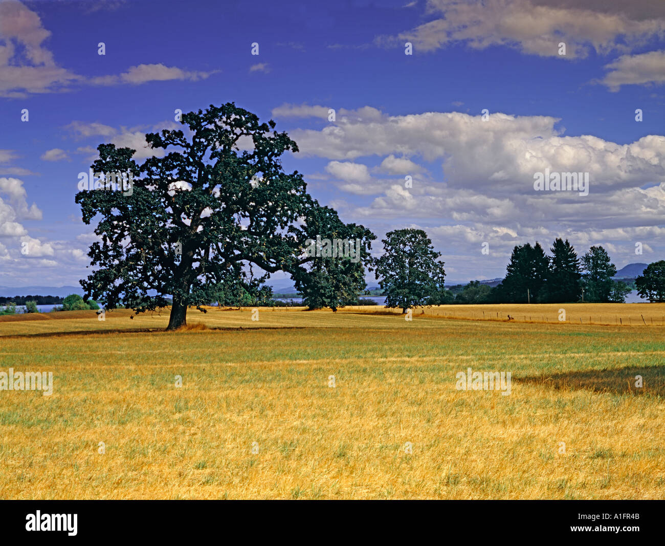 Pastureland near Fern Ridge Reservoir Oregon - Stock Image