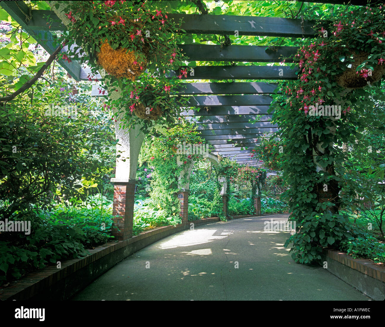 Fuschia lined walkway Park and Tilford Garden Vancouver BC - Stock Image