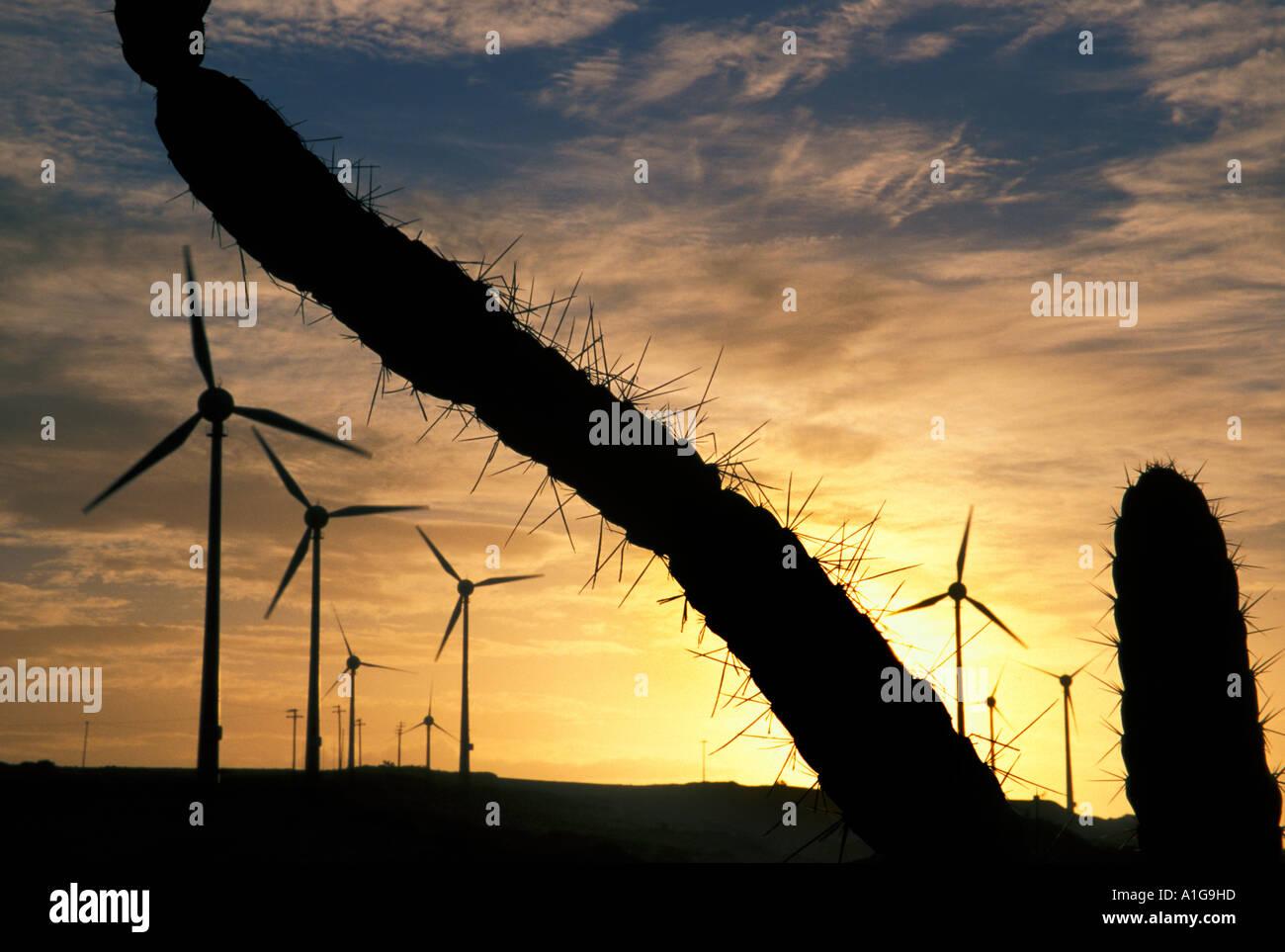 Eolian energy: wind farm 10 MW  at sunset among xerophytic vegetation with cactus near Fortaleza, Ceara, Brazil - Stock Image