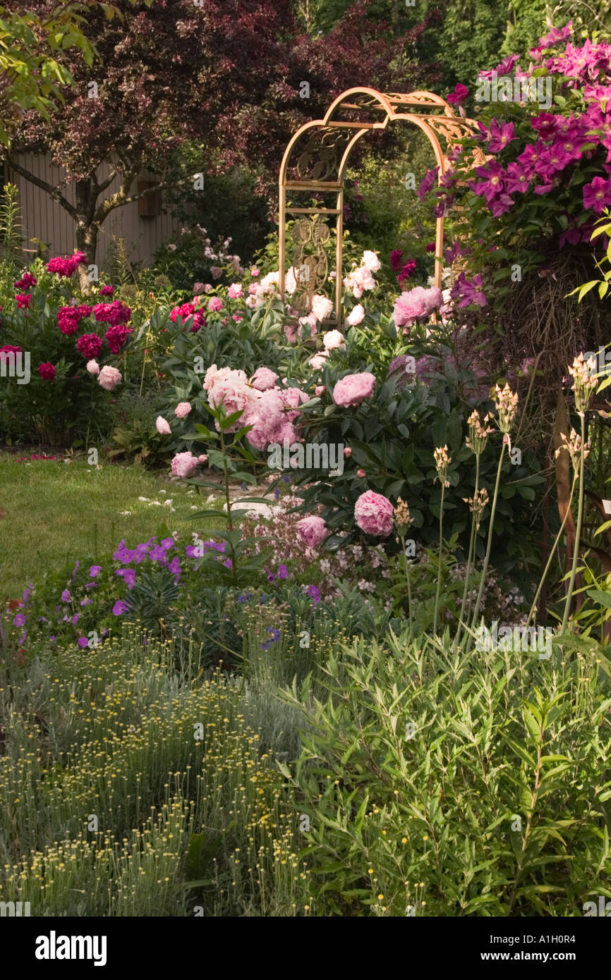 View of the english garden in spring with blooming peonies and arch ...
