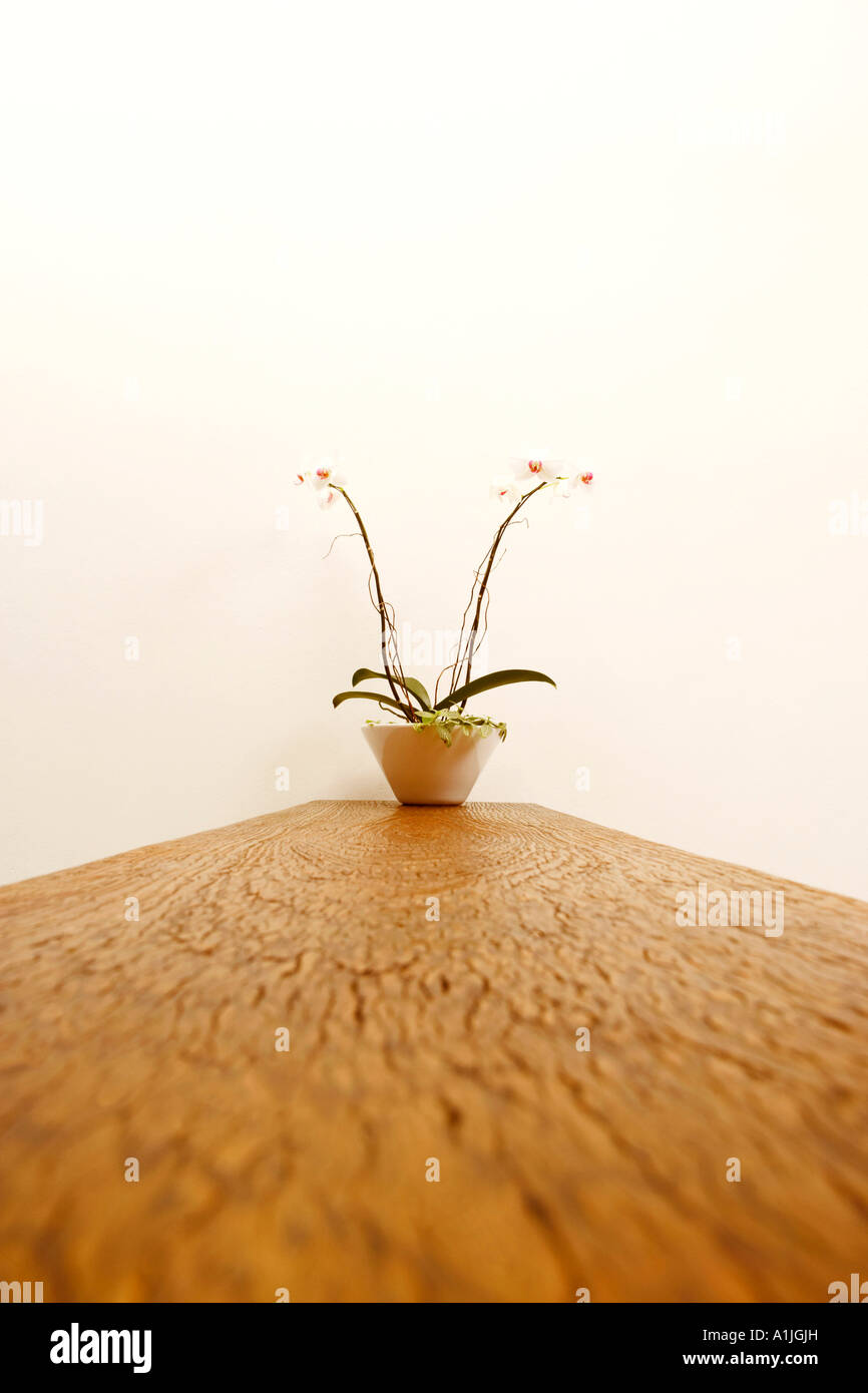Potted plant on a wooden base - Stock Image