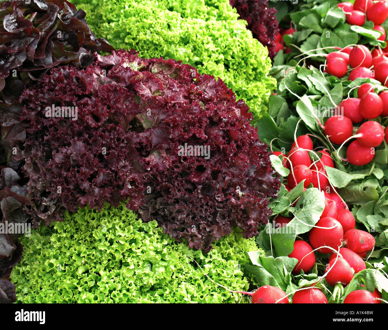 salads and radishes - Stock Image