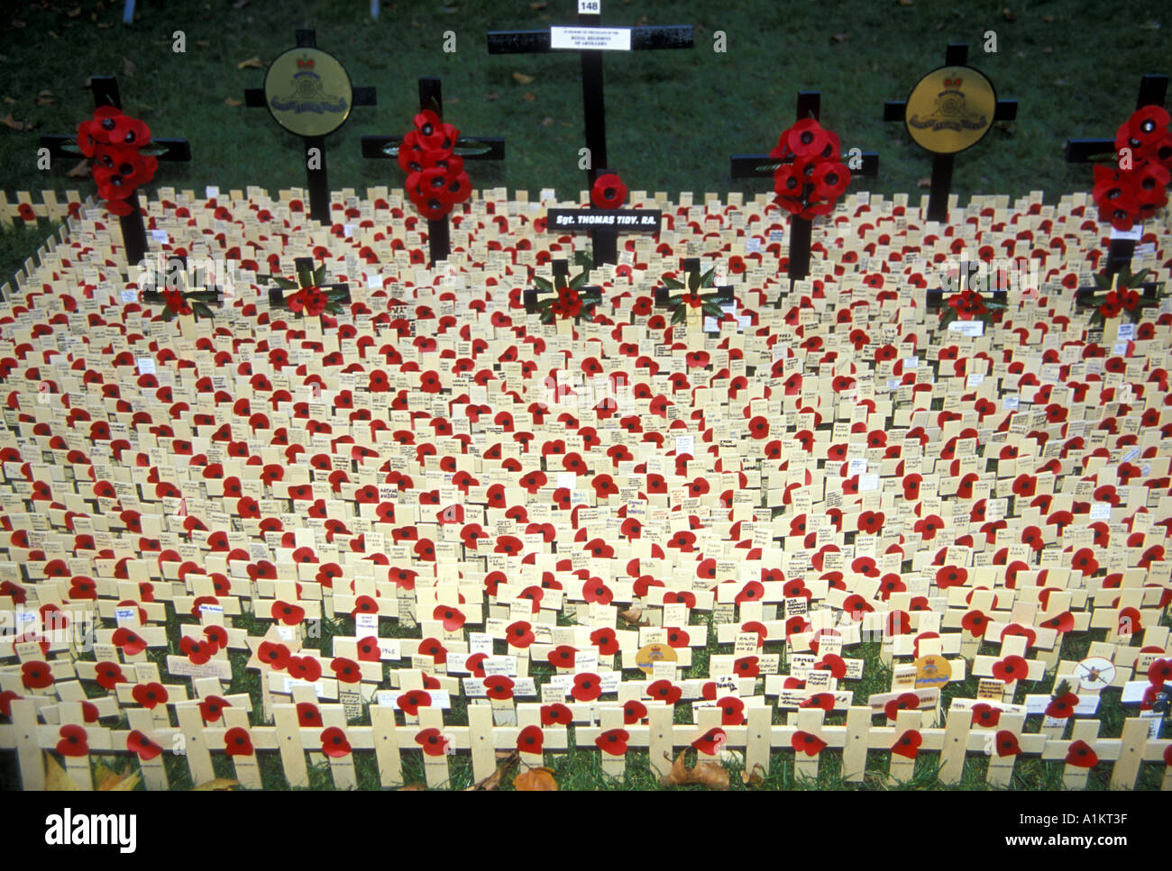 Rememberance Day crosses for the war dead placed outside Westminster Abbey - Stock Image