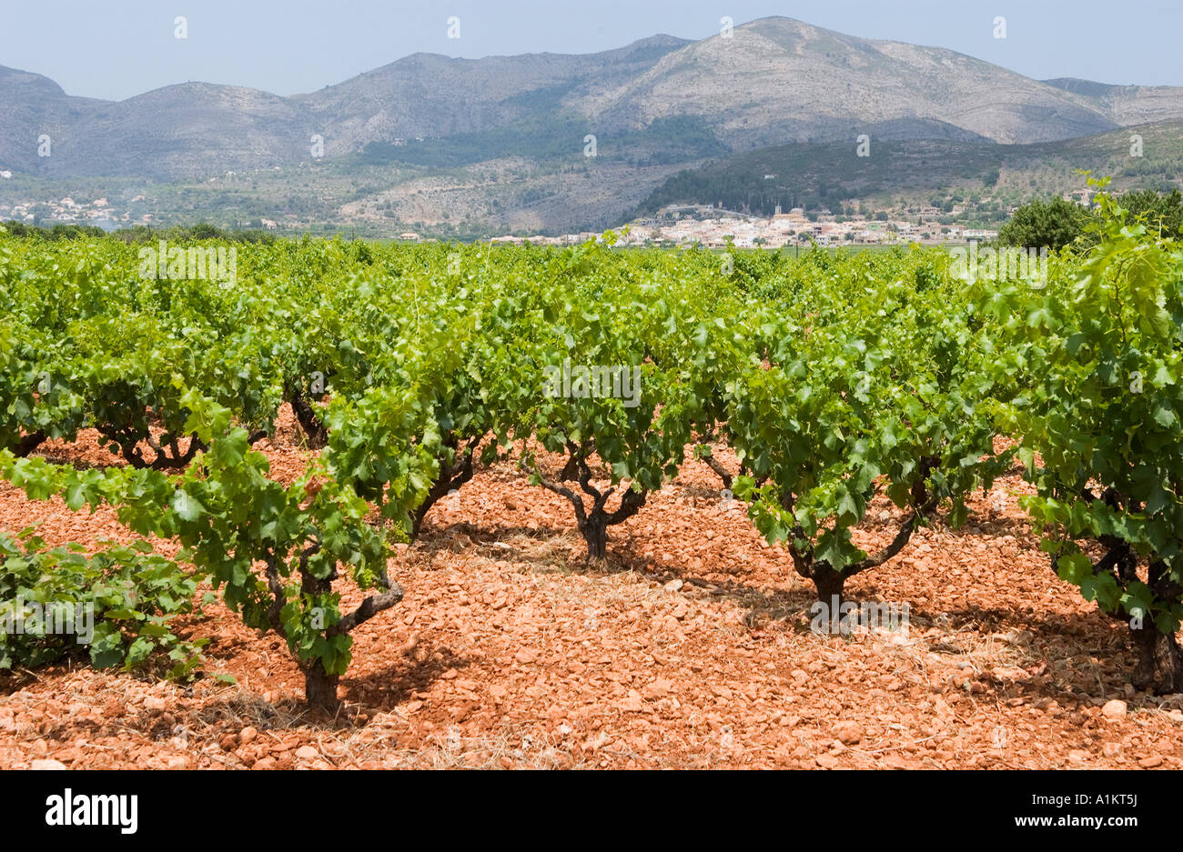 winegrowing in Jalon Valley, Province Alicante, Spain - Stock Image